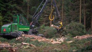 Lesní harvestor strom porazí a naporcuje během oka