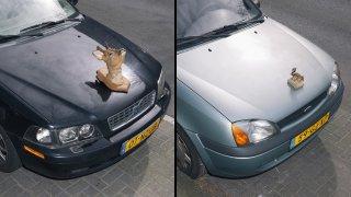 Umělec dělá ze sražených zvířat trofeje na auto 1