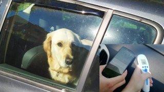 Důchodkyně nechala svého psa zavřeného na slunci v autě. Šla na návštěvu, zvíře se málem upeklo