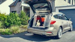 Ford Focus- přeprava psa 1