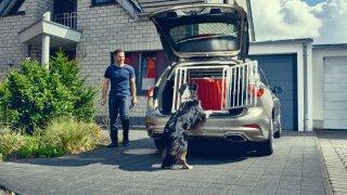 Ford Focus- přeprava psa 2