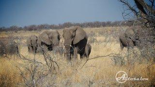 Slony brzy přestanete počítat