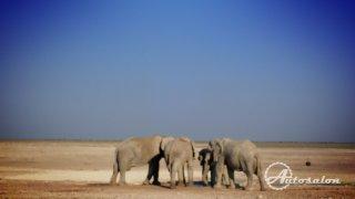 Další sloni v Etoshe
