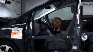 Crash test proměnil psa v hrocha