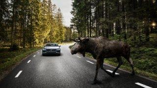 Je velký rozdíl, jestli na silnici srazíte zvíře nebo zvěř. Za srnku nikdo nezodpovídá, za psa ano