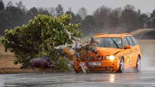 Období nejčastějších srážek se zvěří začíná. Německý autoklub uspořádal crash test auta se sviní