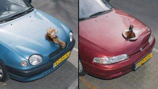Umělec dělá ze sražených zvířat trofeje na auto 2