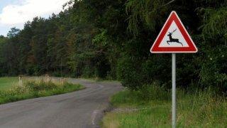 Srna Index informuje, kde se řidiči nejčastěji střetávají se zvěří. Jsou to frekventované silnice
