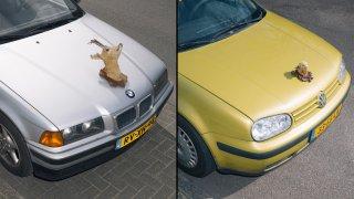 Umělec dělá ze sražených zvířat trofeje na auto 3