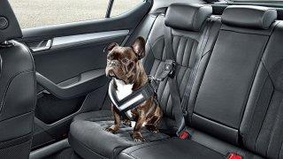 Řidiči své zvířecí miláčky v autech často vozí na volno. Ze zvířete je ale při nehodě smrtící zbraň