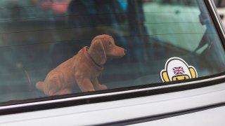 Zadní plato - pes
