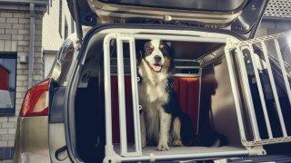 Ford Focus- přeprava psa 3