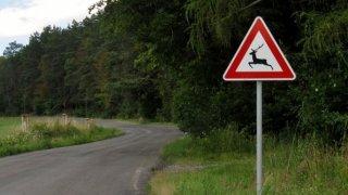 Za zranění po srážce se zvěří řidič nedostane odškodnění. Musel by mít štěstí v podobě blízkého honu