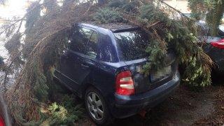 Spadlý strom na auto